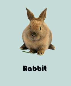 стихи на английском про животных